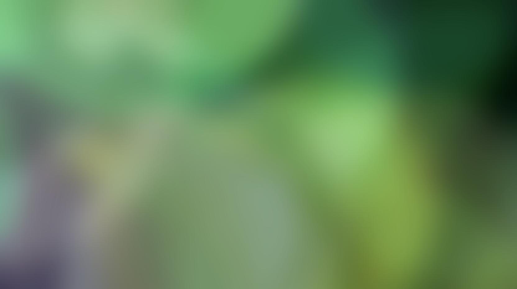 Blurred Green Circles Footer Arizona Junk Removal