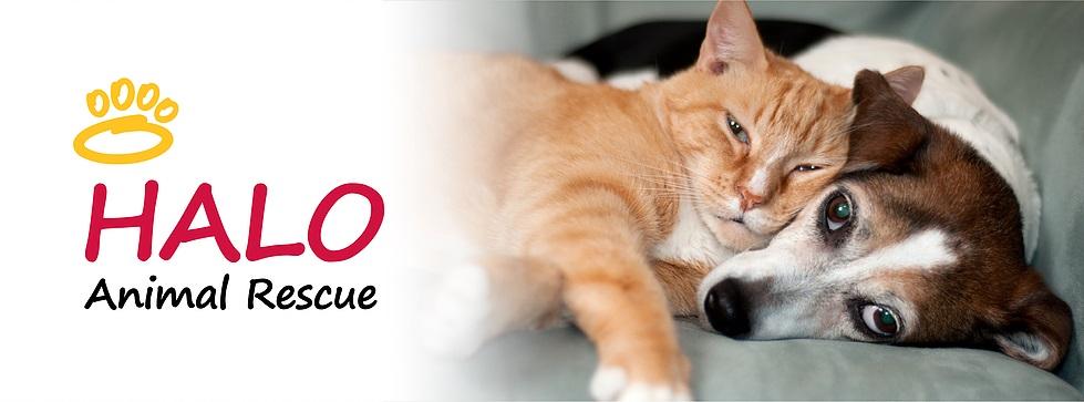 hola animal rescue