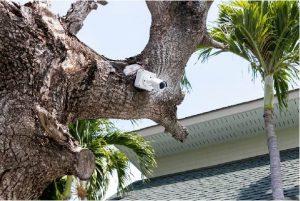 private camera on tree
